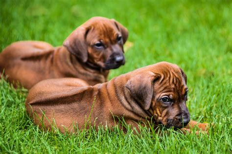 A Complete Guide on How to Train a Guard Dog - DogAppy