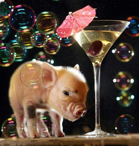Mini pig!! | Pig House | Pinterest | Mini pigs, Minis and