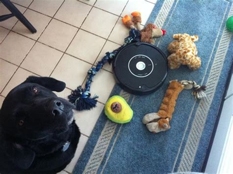 Trapped the Roomba Monster Once and For All - I Has A