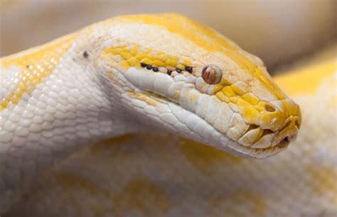 Missing Python Discovered After Dropping From Hospital